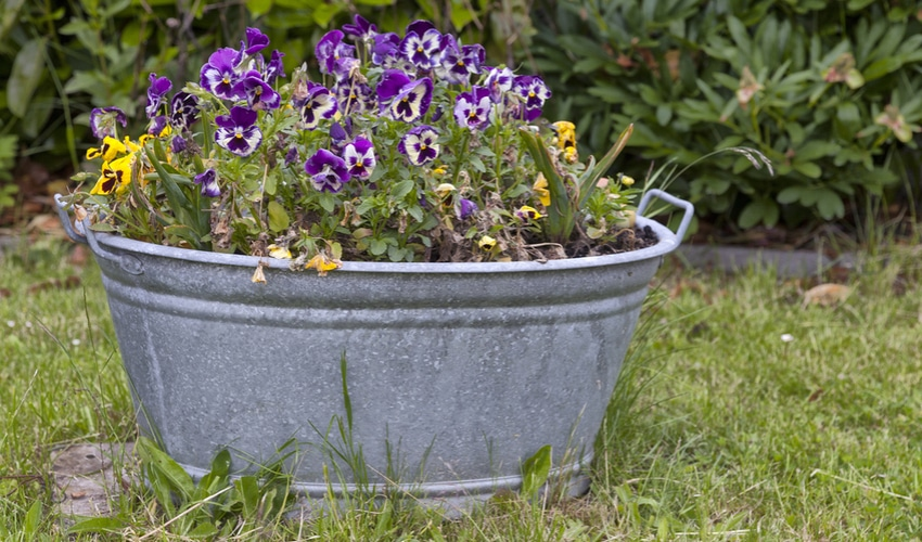 DIY Gardening Ideas Perfect For Your Yard This Summer